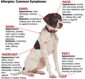 How do you treat hot spots on dogs?